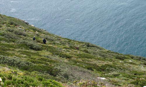 Zdjęcie RPA / Cape Point / Cape Point / stromo