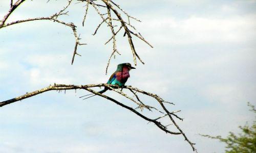 RPA / brak / Kruger National Park / Kraska