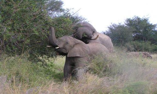 RPA / brak / Kruger National Park / słonie
