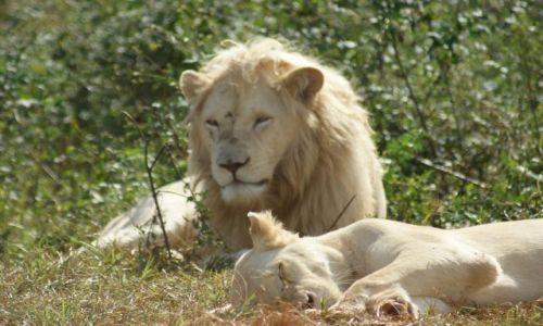Zdjecie RPA / Park  / Krugera / Pilnuje wybranki