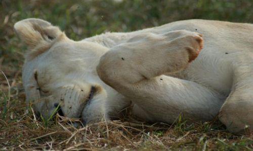 Zdjecie RPA / Park  / Krugera / Słodki sen