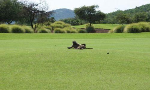 Zdjecie RPA / Pole golfowe / San City / Na polu golfowym bez kija?