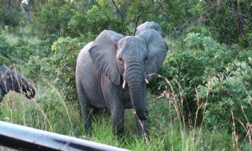 Zdjecie RPA / Park  / Krugera / Słonie
