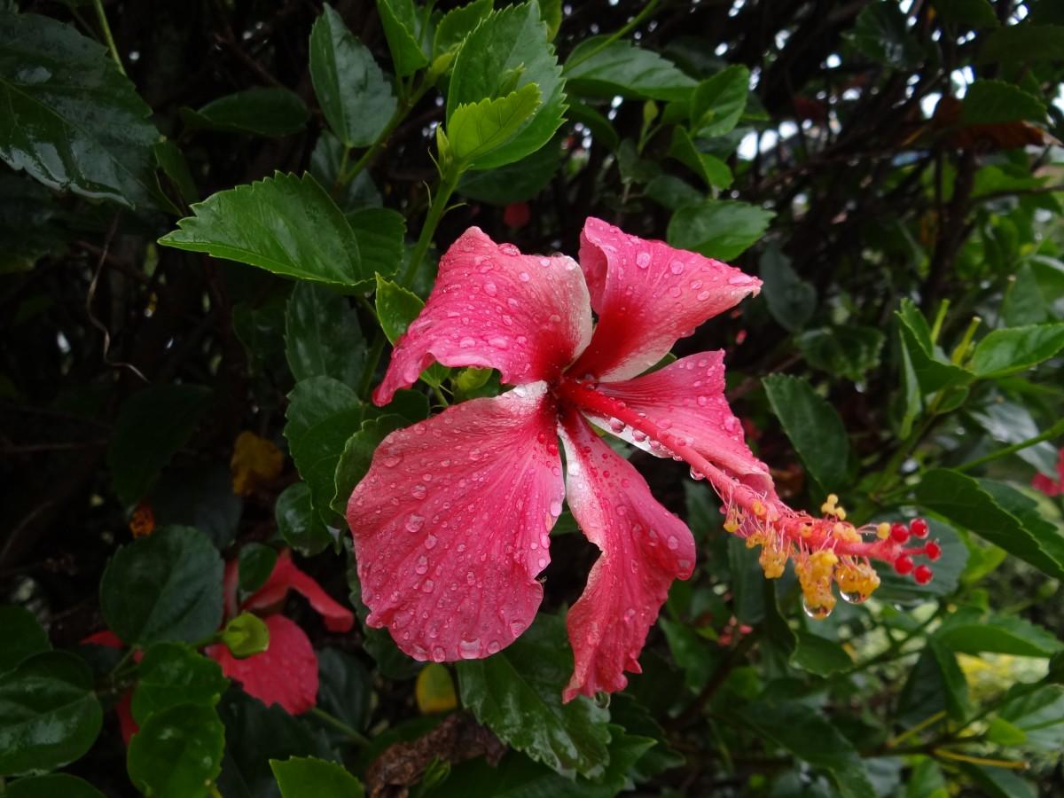 Zdjęcia: Kibeho, Południe, Po deszczu, RUANDA