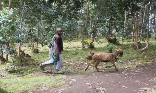 RUANDA / okolice ruhengeri / okolice ruhengeri / ruanda countyside