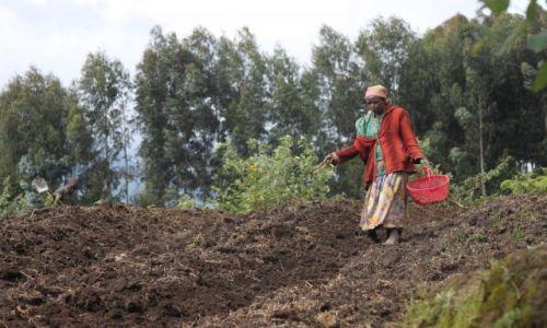 Zdjęcie RUANDA / okolice Ruhengeri / okolice Ruhengeri / ruanda countryside