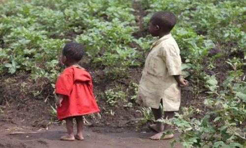 Zdjecie RUANDA / okolice ruhengeri / okolice ruhengeri / ruanda countryside