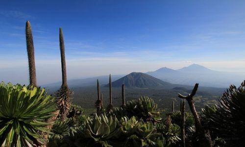 Zdjęcie RUANDA / Volcanos National Park / Rwanda / Wulkany