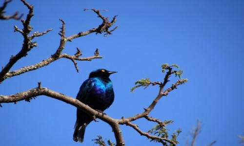 Zdjęcie RUANDA / Park Akagera / j.w. / W kolorze blue