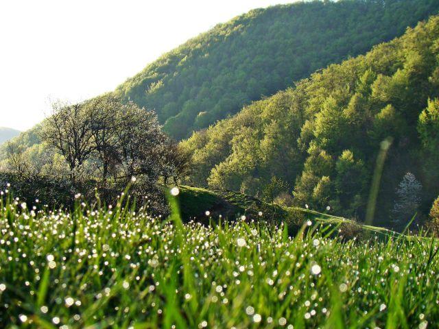 Zdjęcia: Gdzieś w górach Apuseni, Poranek, RUMUNIA