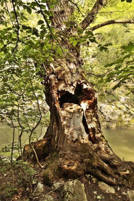 Zdjęcia: wąwóz Turda, Transylwania, W wąwozie Turda, RUMUNIA