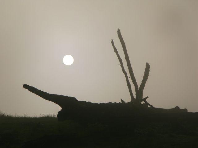 Zdjęcia: dolna buków - Góry Sureanu, Transylwania, Słońce..., RUMUNIA