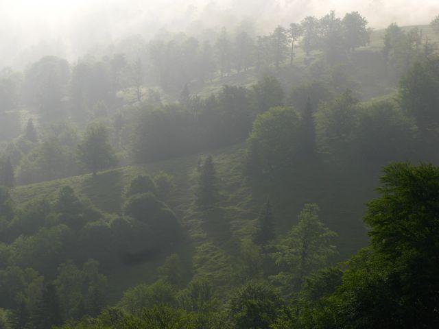 Zdjęcia: dolina buków - Góry Sureanu, Transylwania, Dolina buków..., RUMUNIA