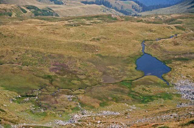 Zdjęcia: zbocza Vf. Rebra, Góry Rodniańskie, Dolina pod Vf. Rebra, RUMUNIA