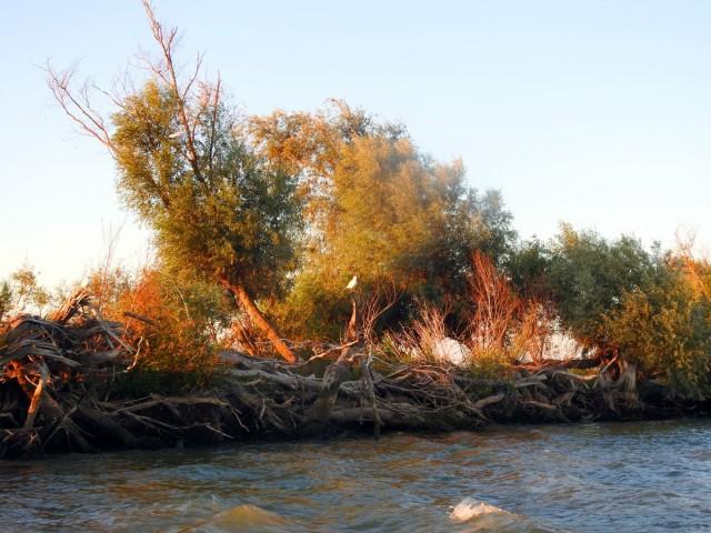 Zdjęcia: Dunaj, Tulcza, Delta Dunaju 1, RUMUNIA