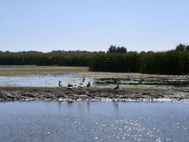Zdjęcia: Pardina, Delta Dunaju, rezerwat ptaków, RUMUNIA