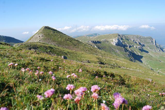 Zdjęcia: Góry BUCEGI, Transylwania, Zieleń gór, RUMUNIA