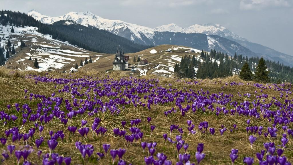 Zdjęcia: Przełęcz Prislop, KONKURS Marzenia się spełniają, RUMUNIA