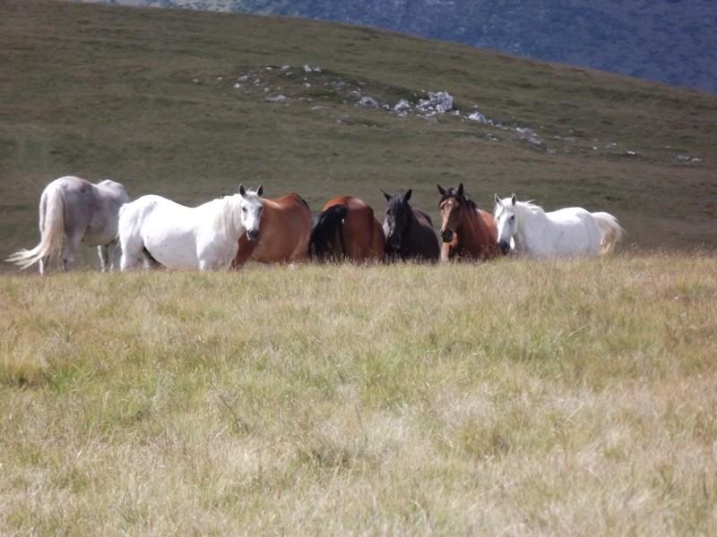 Zdjęcia: Góry Vulcan, Karpaty Południowe, Konie, RUMUNIA