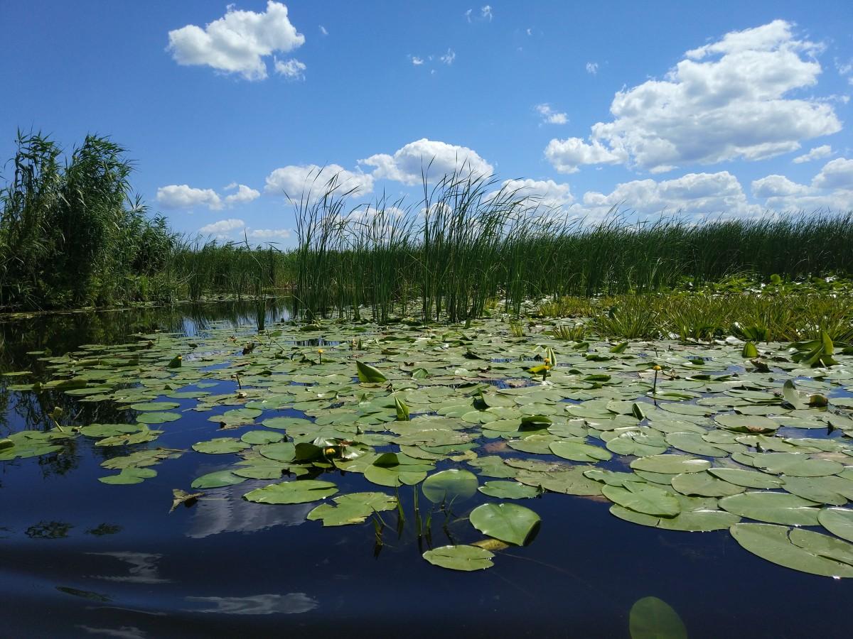 Zdjęcia: Delta Dunaju, Karpaty, RUMUNIA