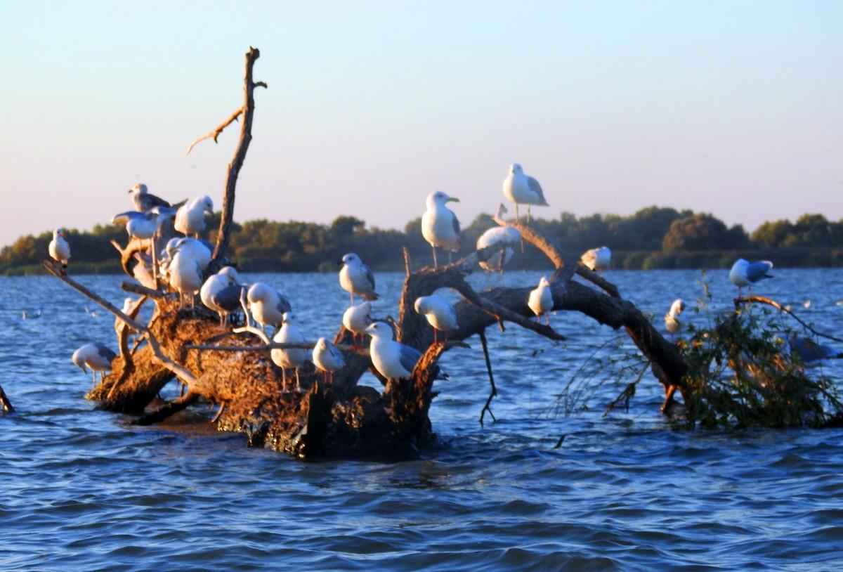 Zdjęcia: Dunaj, Tulcza, Delta Dunaju 2, RUMUNIA