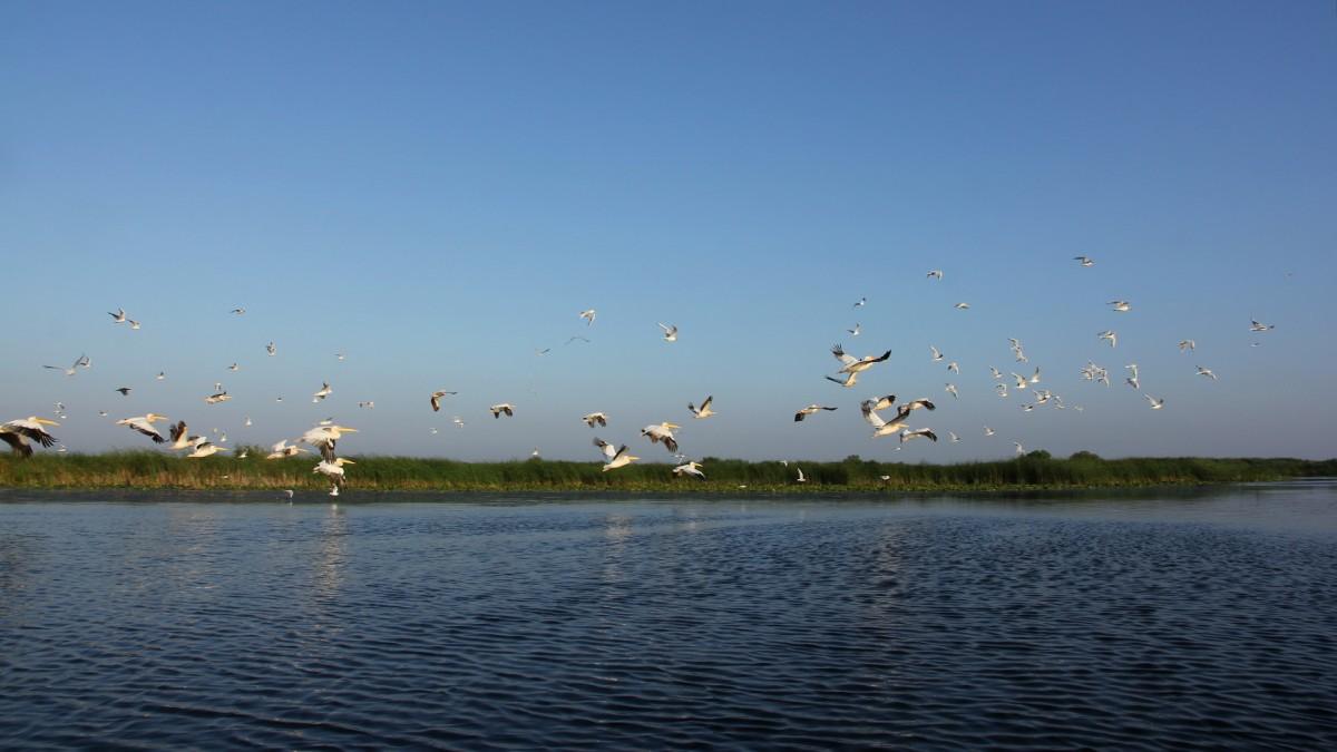 Zdjęcia: Delta Dunaju, Ptaki w Delcie Dunaju, RUMUNIA