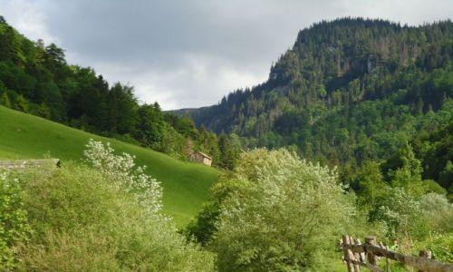 Zdjęcie RUMUNIA / Transylwania / Góry Rodniańskie / Rumunia 2011