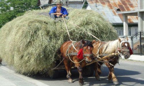 Zdjecie RUMUNIA / Maramuresz / Sapanta / Rumunia 2011