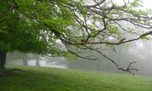 Zdjecie RUMUNIA / Transylwania / gdzieś tam w środku... / dzień się budzi....