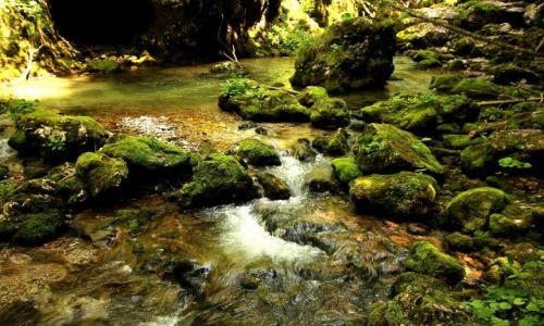 Zdjecie RUMUNIA / Transylwania / wąwóz / Wąwóz Galbenei