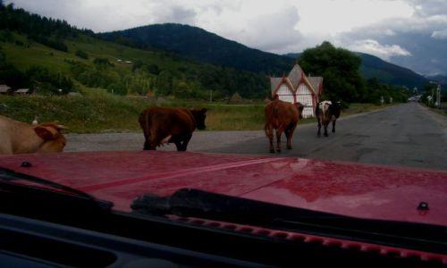 RUMUNIA / - / Vadu Izei / Na drodze w Rumunii