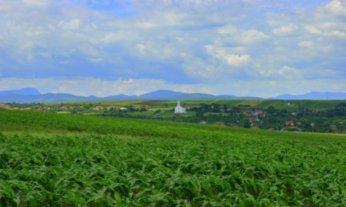 Zdjęcie RUMUNIA / Cluj / Cluj / Cluj