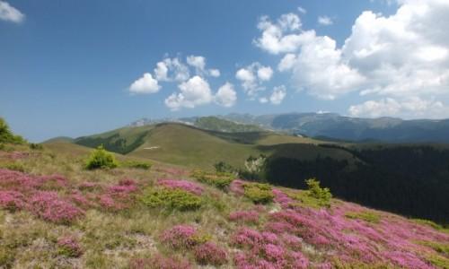 Zdj�cie RUMUNIA / Bucegi / Bucegi i okolice / Bucegi