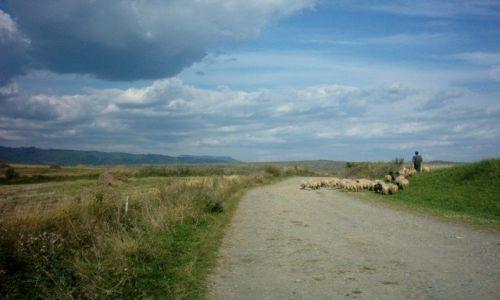 Zdjecie RUMUNIA / Transylwania / Sfanthu Sieu / Owieczki z pasterzem