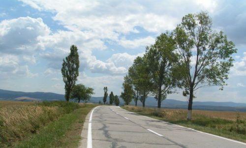 Zdjęcie RUMUNIA / Munteania / Resita / Aleja drzew