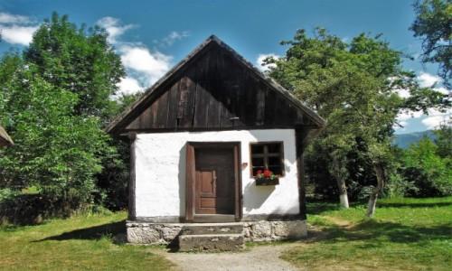 Zdjęcie RUMUNIA / Transylwania / Bran / Kolory lata