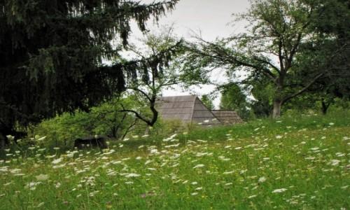 Zdjecie RUMUNIA / Marmarosz / Syhot Marmaroski / Koronka z kwiat