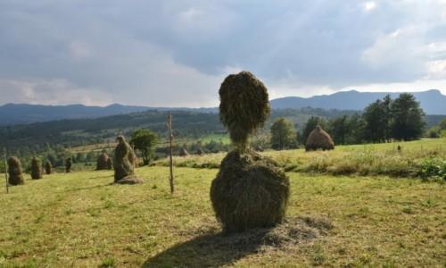 Zdj�cie RUMUNIA / Maramuresz / okolice Budesti / Na ��kach