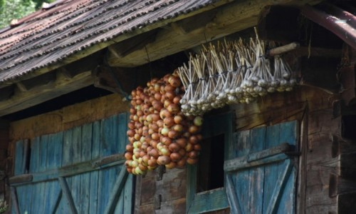 Zdjęcie RUMUNIA / Maramuresz / Kotlina Budesti / Wiejskie klimaty -czosnek i cebula