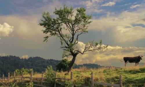 Zdjecie RUMUNIA / Siedmiogród / Fundata / Krajobraz trochę oniryczny