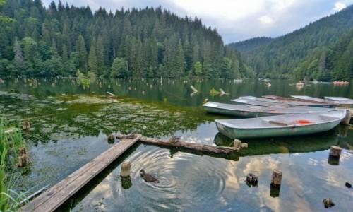 RUMUNIA / wschodnie Karpaty / W sąsiedztwie wąwozu Bicaz / Lacu Rosu- jezioro marzeń