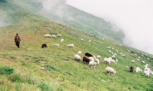 Zdjecie RUMUNIA / Bucegi / gdzies w Bucegach... / w górach...