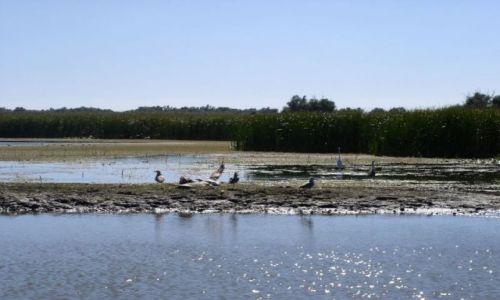 Zdjecie RUMUNIA / Delta Dunaju / Pardina / rezerwat ptaków