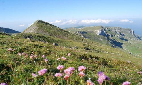 Zdjecie RUMUNIA / Transylwania / Góry BUCEGI / Zieleń gór