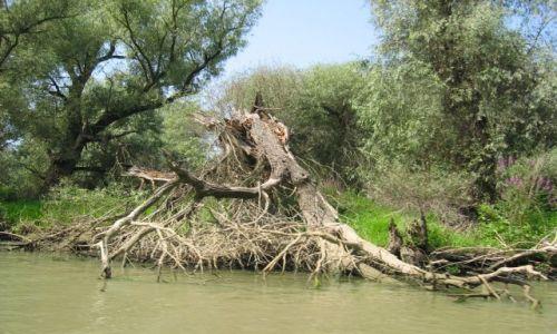 Zdjecie RUMUNIA / Tulcza / okolice Murighol / Delta Dunaju 2