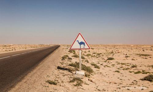 Zdjecie SAHARA ZACHODNIA / Sahara Zachodnia / Sahara Zachodnia / African Road Trip - wybrzeże Sahary Zachodniej