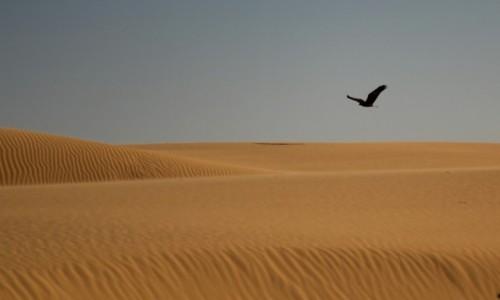 Zdjecie SAHARA ZACHODNIA / Sahara / Sahara / Lot nad piaskami