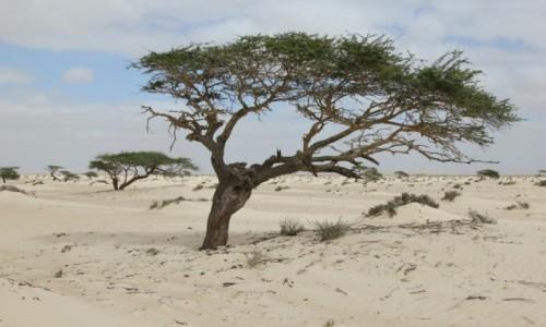 Zdjecie SAHARA ZACHODNIA / Sahara / Sahara / Zima na pustyni