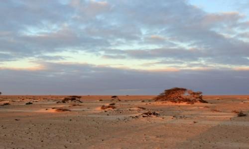 SAHARA ZACHODNIA / Sahara / w piaskach pustyni / Daleko od drogi