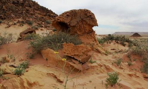 Zdjecie SAHARA ZACHODNIA / Sahara / gdzieś w piaskach pustyni / Saharyjski grzybek